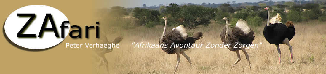 Experience an African adventure safely and comfortably